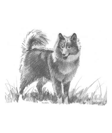 Pencil Sketch - Terry's Dog