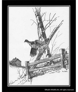 Pencil Sketch - Ruffed Grouse
